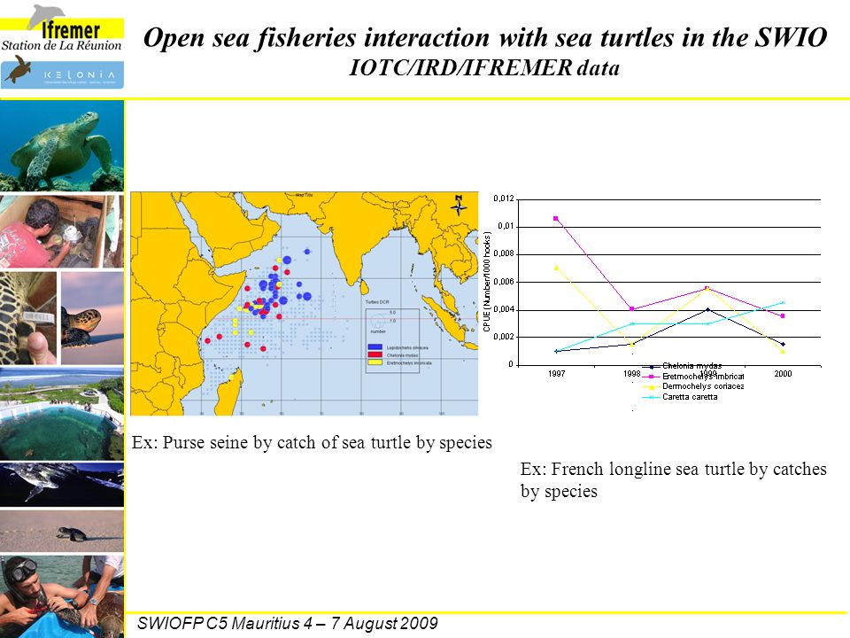 SWIOFP C5 Mauritius 4 – 7 August 2009 Open sea fisheries interaction with sea turtles in the SWIO IOTC/IRD/IFREMER data Ex: Purse seine by catch of se
