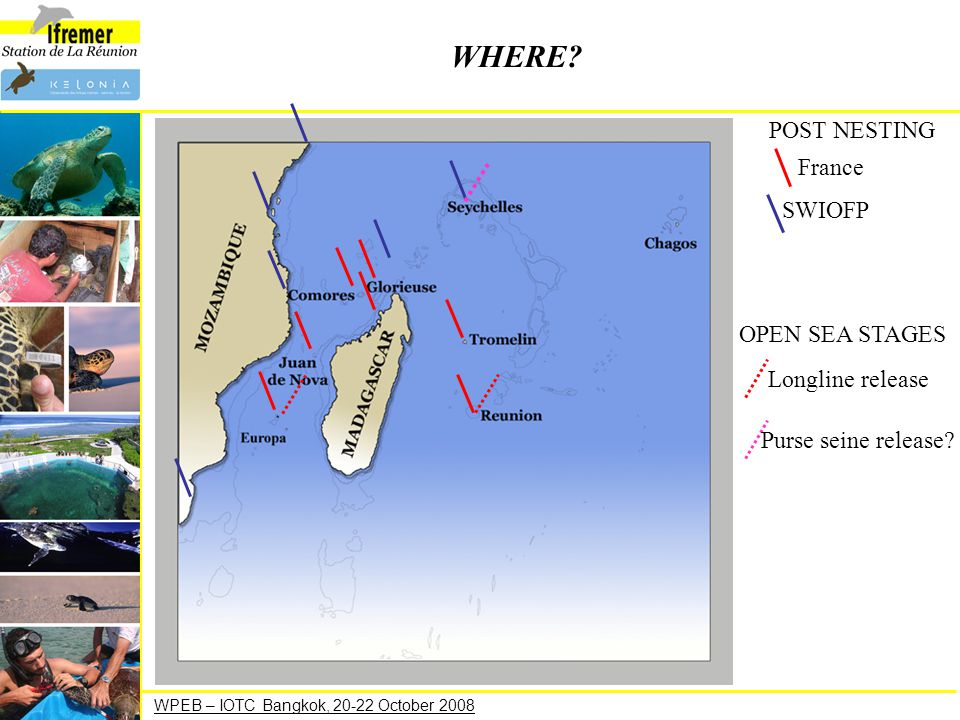 WPEB – IOTC Bangkok, 20-22 October 2008 WHERE? POST NESTING France SWIOFP OPEN SEA STAGES Longline release Purse seine release?