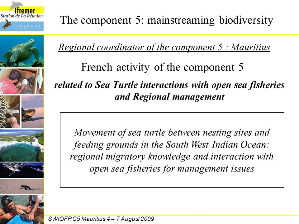 French activity of the component 5 related to Sea Turtle interactions with open sea fisheries and Regional management Movement of sea turtle between n