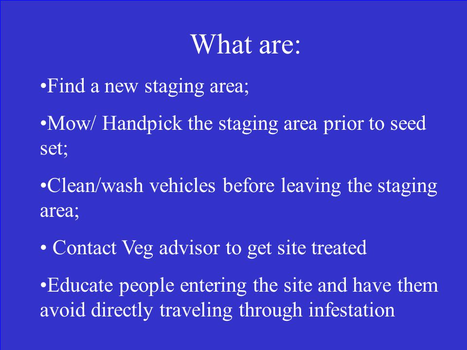 You Identify an Oxeye Daisy infestation in equipment stageing area. List two (2) steps to limit plant spread: CRD
