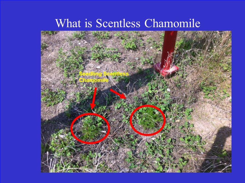 Find the Invasive Plant,