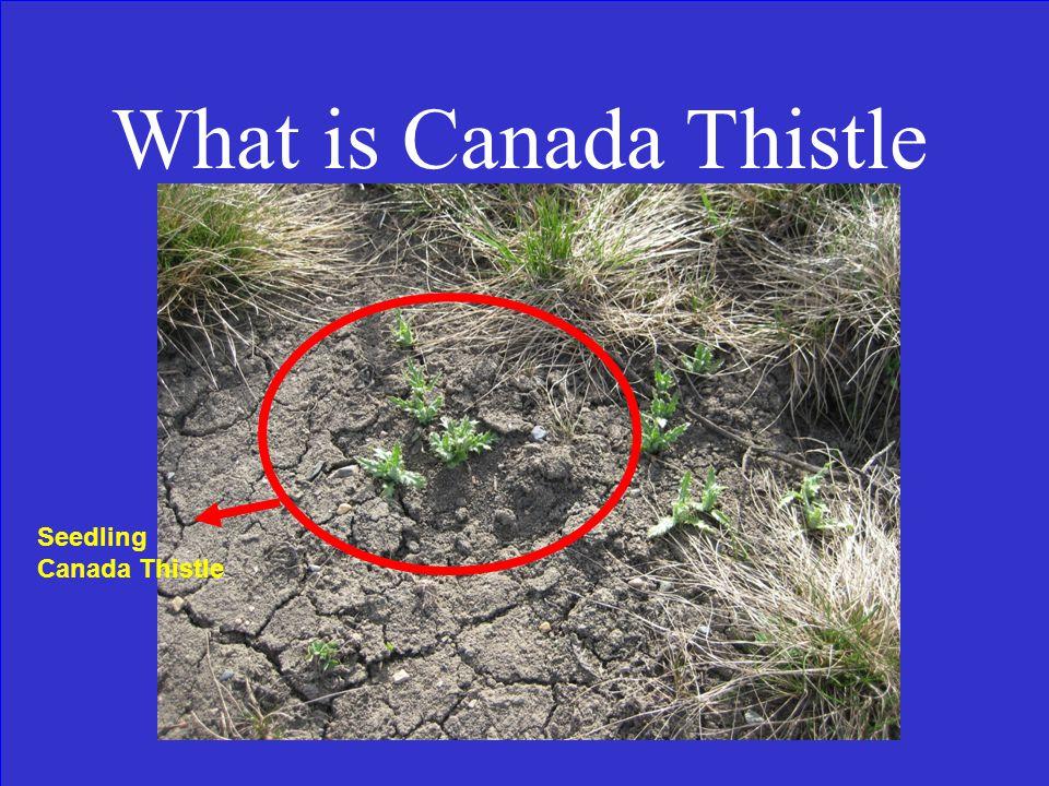Find The Invasive Plant