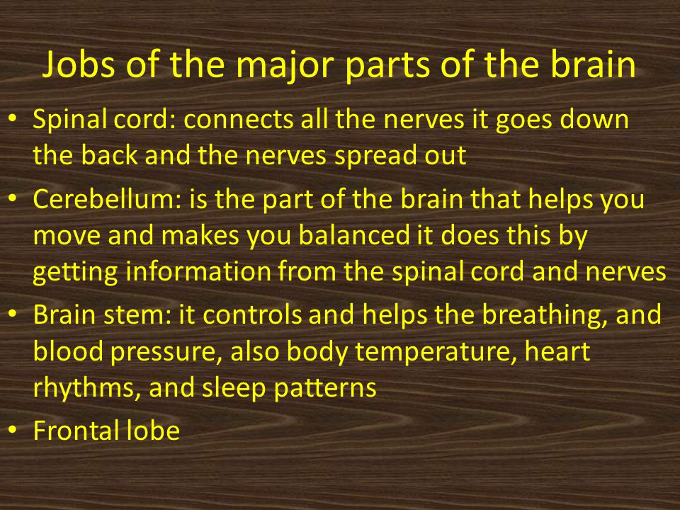 Jobs of the major parts of the brain Spinal cord: connects all the nerves it goes down the back and the nerves spread out Cerebellum: is the part of the brain that helps you move and makes you balanced it does this by getting information from the spinal cord and nerves Brain stem: it controls and helps the breathing, and blood pressure, also body temperature, heart rhythms, and sleep patterns Frontal lobe
