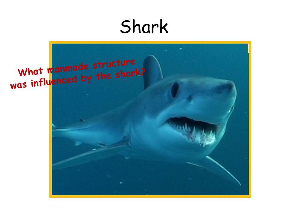 Shark W h a t m a n m a d e s t r u c t u r e w a s i n f l u e n c e d b y t h e s h a r k