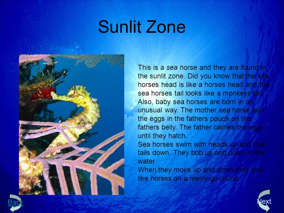 Sunlit Zone This is a sea horse and they are found in the sunlit zone. Did you know that the sea horses head is like a horses head and the sea horses