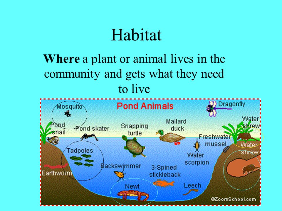 community All the animal and plant populations living in the ecosystem