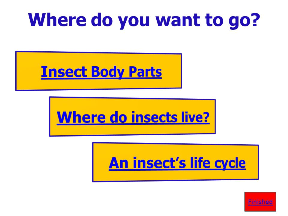 False, An insect can live in your backyard! Lets review again!