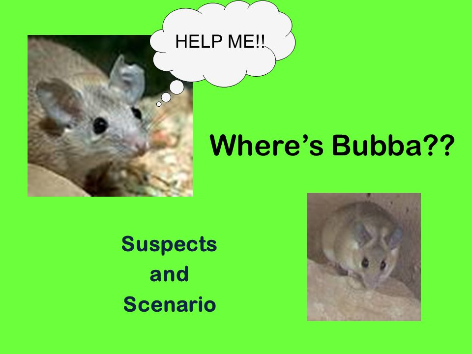 Wheres Bubba Suspects and Scenario HELP ME!!