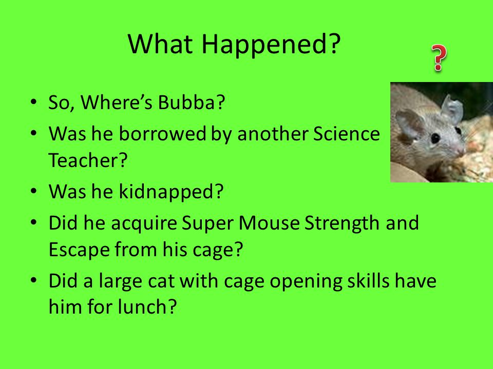 Bubbas Statistics Height – 1.5 inches Weight – 6 ounces Length – 7.4 inches (including tail) Black beady eyes Black whiskers Short pointy ears, pink pointed nose Long hairless tail Spiny, brown haircoat Last seen in cage by Mrs.