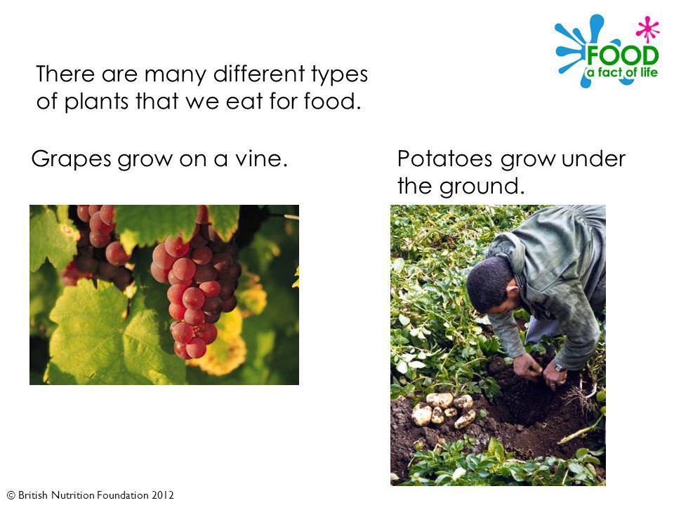 © British Nutrition Foundation 2012 There are many different types of plants that we eat for food.