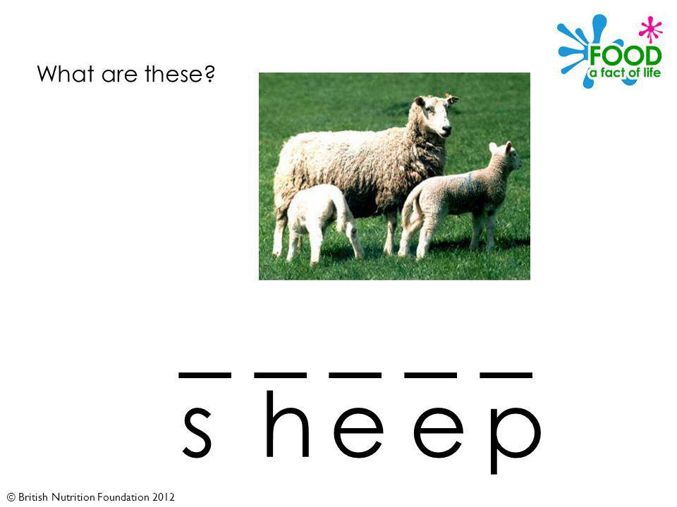 © British Nutrition Foundation 2012 What are these _ _ _ _ _ sheep