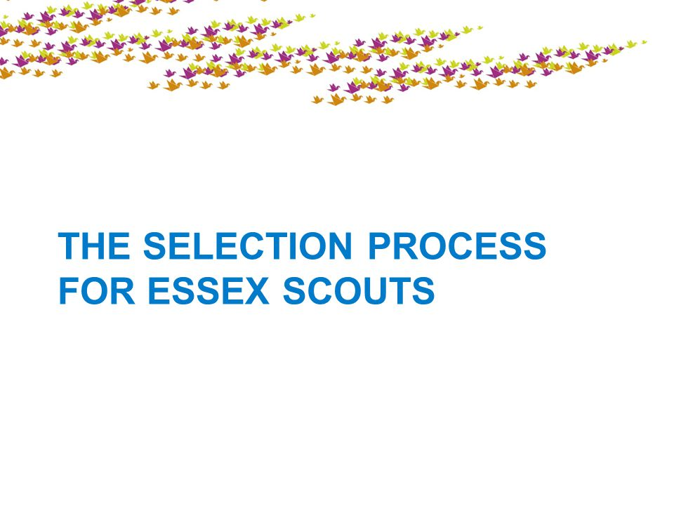 THE SELECTION PROCESS FOR ESSEX SCOUTS
