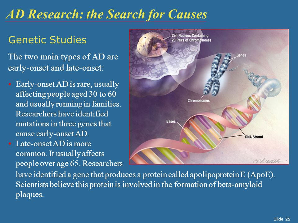 Genetic Studies The two main types of AD are early-onset and late-onset: AD Research: the Search for Causes Early-onset AD is rare, usually affecting people aged 30 to 60 and usually running in families.