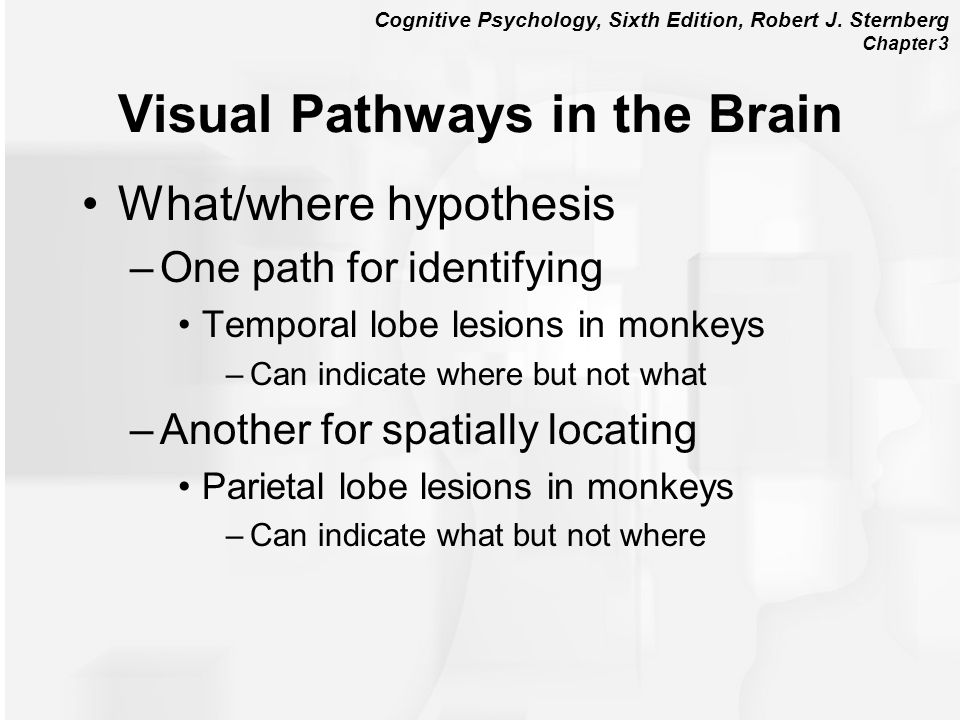 Cognitive Psychology, Sixth Edition, Robert J. Sternberg Chapter 3 Visual Pathways in the Brain What/where hypothesis –One path for identifying Tempor