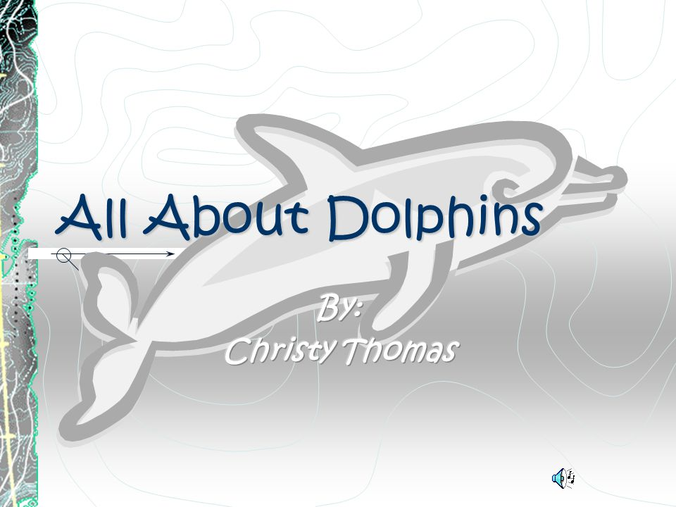 AllAboutDolphins All About Dolphins