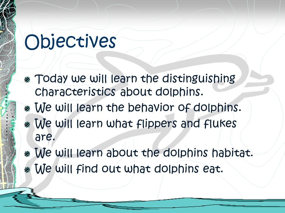 Objectives Today we will learn the distinguishing characteristics about dolphins. We will learn the behavior of dolphins. We will learn what flippers