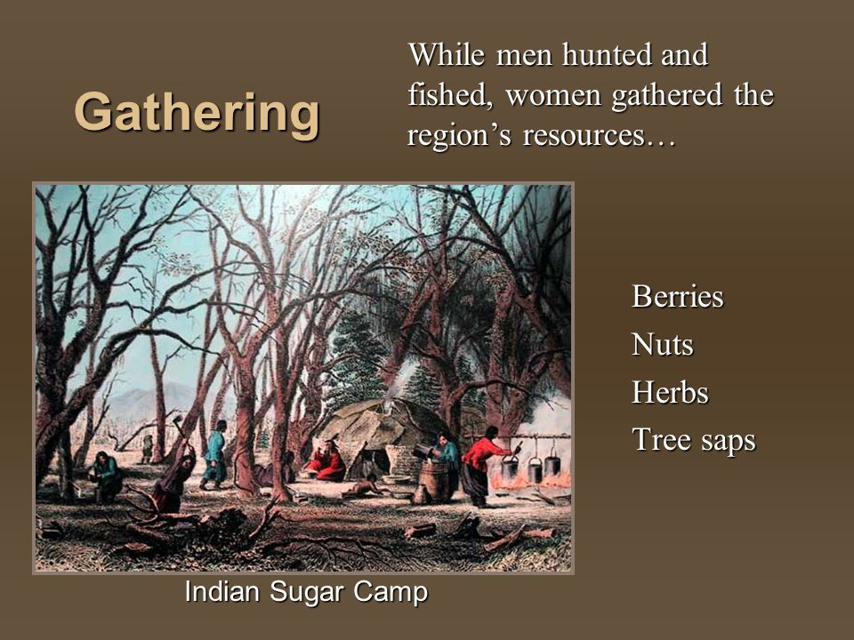 Gathering Berries Nuts Herbs Tree saps While men hunted and fished, women gathered the regions resources… Indian Sugar Camp