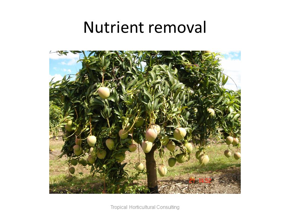 Nutrient removal Tropical Horticultural Consulting