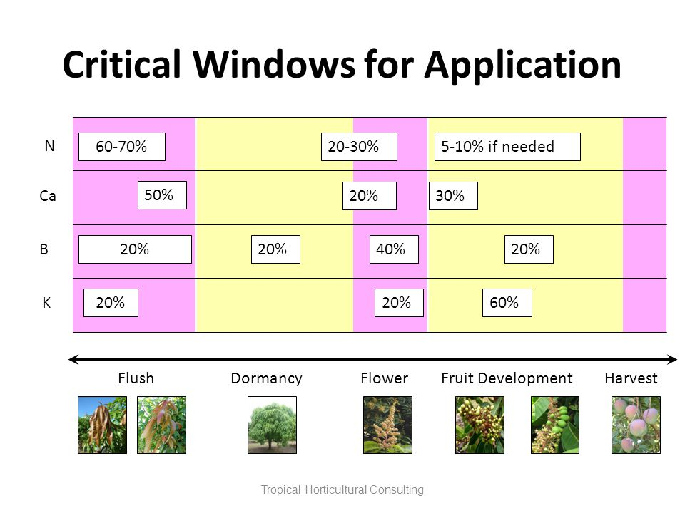 Critical Windows for Application Tropical Horticultural Consulting N FlushDormancy Flower Fruit Development Harvest K 20% 60% B 40%20% 20-30%5-10% if