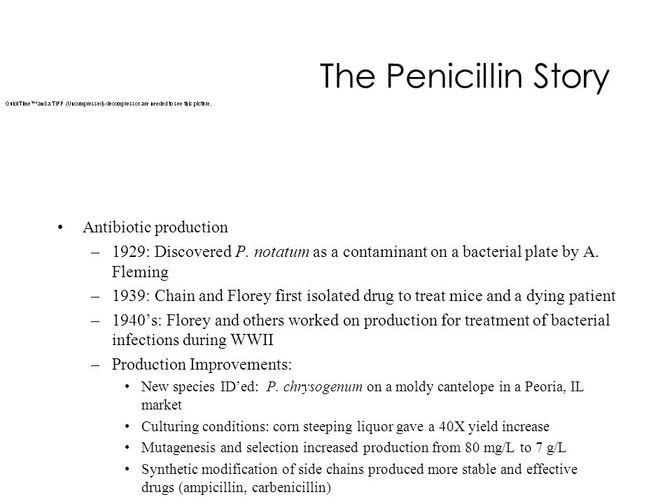 The Penicillin Story Antibiotic production –1929: Discovered P. notatum as a contaminant on a bacterial plate by A. Fleming –1939: Chain and Florey fi