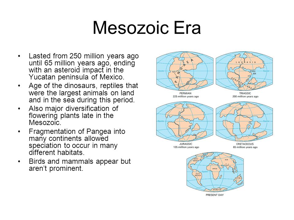 Mesozoic Era Lasted from 250 million years ago until 65 million years ago, ending with an asteroid impact in the Yucatan peninsula of Mexico. Age of t