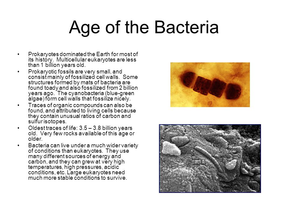 Age of the Bacteria Prokaryotes dominated the Earth for most of its history. Multicellular eukaryotes are less than 1 billion years old. Prokaryotic f