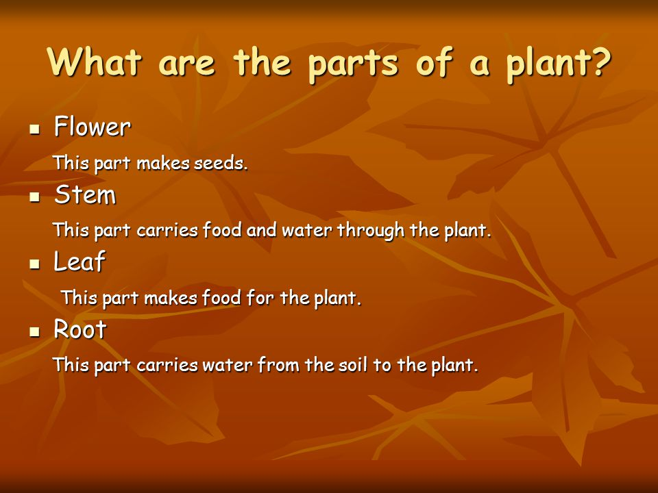 What are the parts of a plant? Flower Flower This part makes seeds. This part makes seeds. Stem Stem This part carries food and water through the plan
