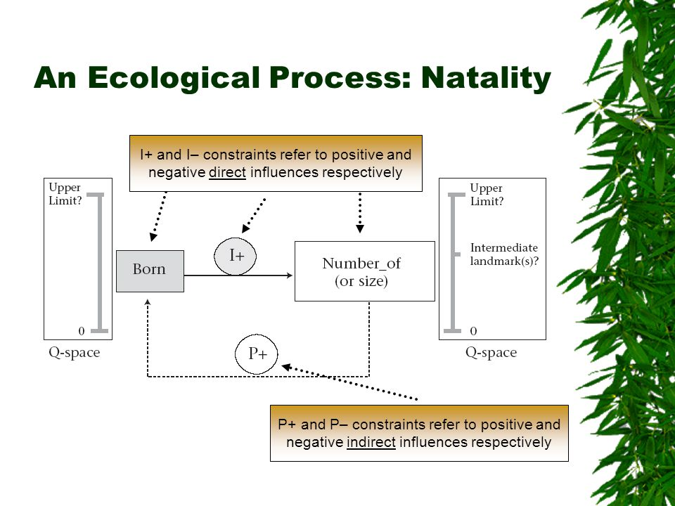 An Ecological Process: Natality BNof I+ and I– constraints refer to positive and negative direct influences respectively P+ and P– constraints refer to positive and negative indirect influences respectively