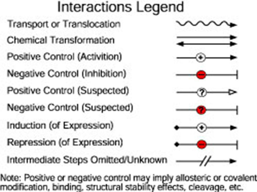 Overview of our approach Represent signal network as a knowledge base that describes actions/events (biological interactions, processes).