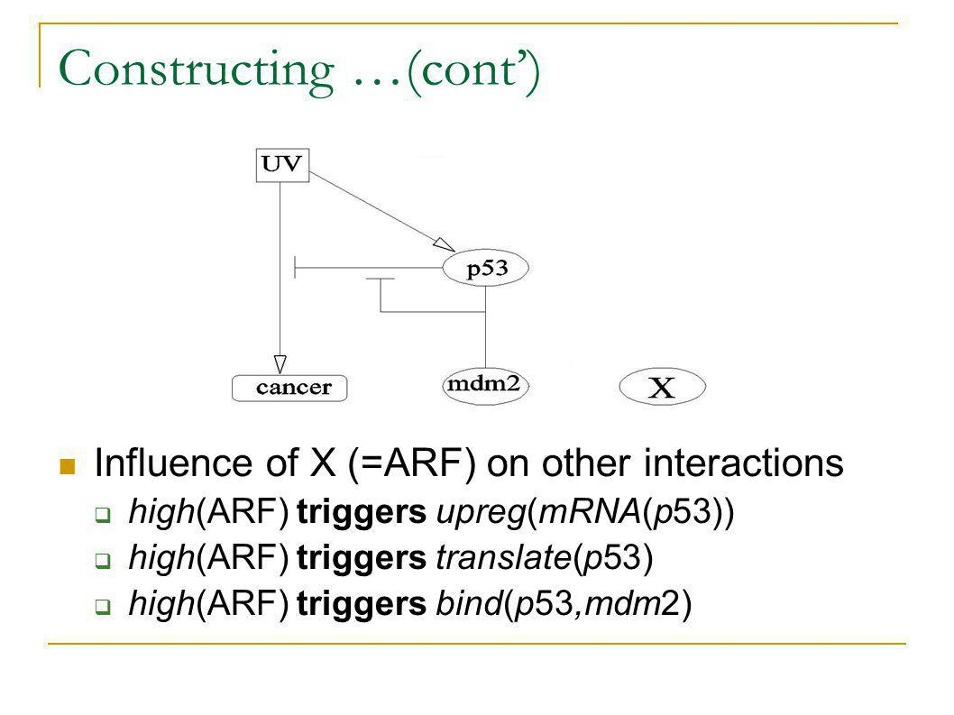 Influence of X (=ARF) on other interactions high(ARF) triggers upreg(mRNA(p53)) high(ARF) triggers translate(p53) high(ARF) triggers bind(p53,mdm2) Constructing …(cont)