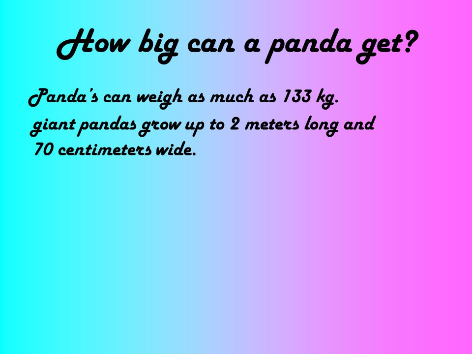 How big can a panda get? Pandas can weigh as much as 133 kg. giant pandas grow up to 2 meters long and 70 centimeters wide.