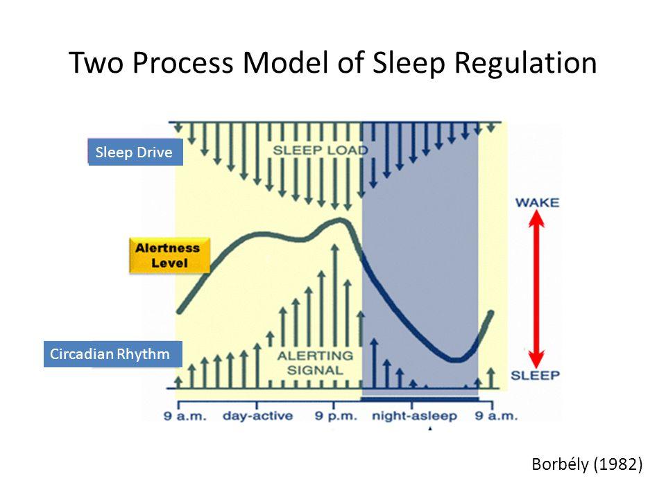 Two Process Model of Sleep Regulation Borbély (1982) Sleep Drive Circadian Rhythm