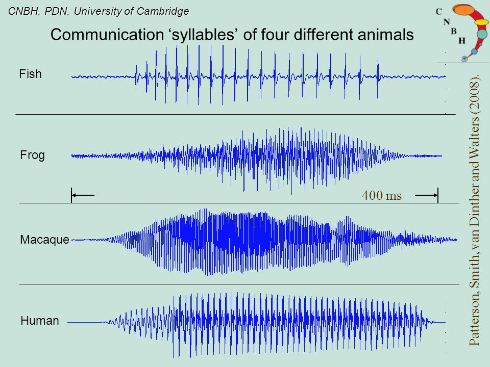 CNBH, PDN, University of Cambridge What and Who in vocal sounds The shape of the envelope largely determines vowel type.