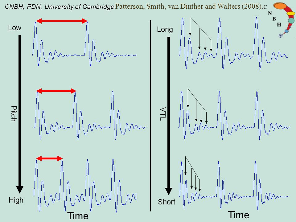 CNBH, PDN, University of Cambridge Low High Pitch Long Short VTL Time Patterson, Smith, van Dinther and Walters (2008).