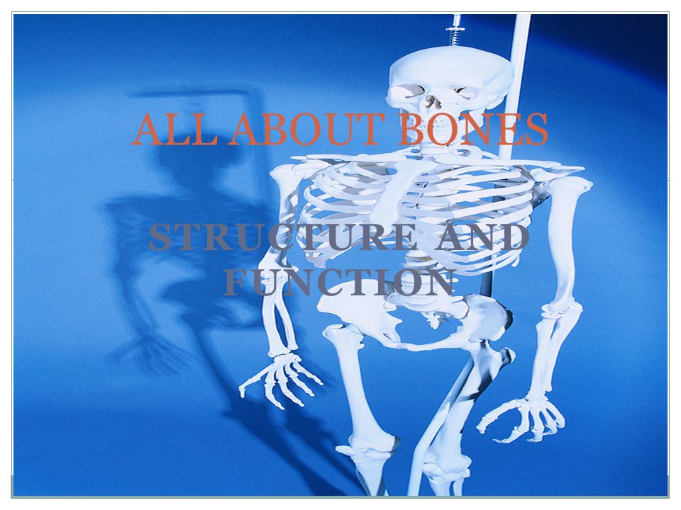 STRUCTURE AND FUNCTION ALL ABOUT BONES