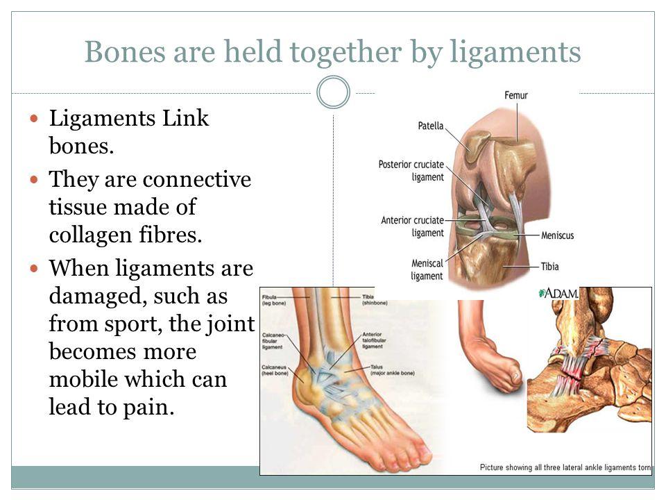 Bones are held together by ligaments Ligaments Link bones.