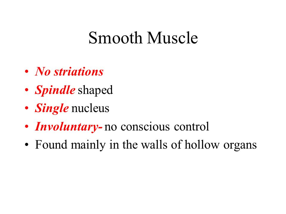Smooth Muscle No striations Spindle shaped Single nucleus Involuntary- no conscious control Found mainly in the walls of hollow organs