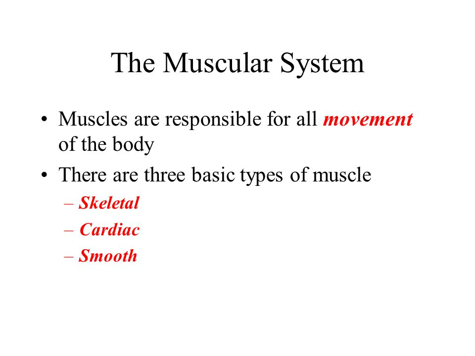 The Muscular System Muscles are responsible for all movement of the body There are three basic types of muscle –Skeletal –Cardiac –Smooth
