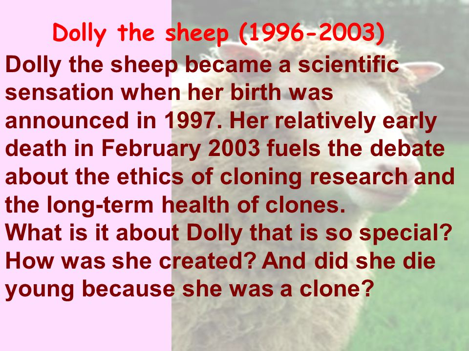 Dolly the sheep became a scientific sensation when her birth was announced in 1997.