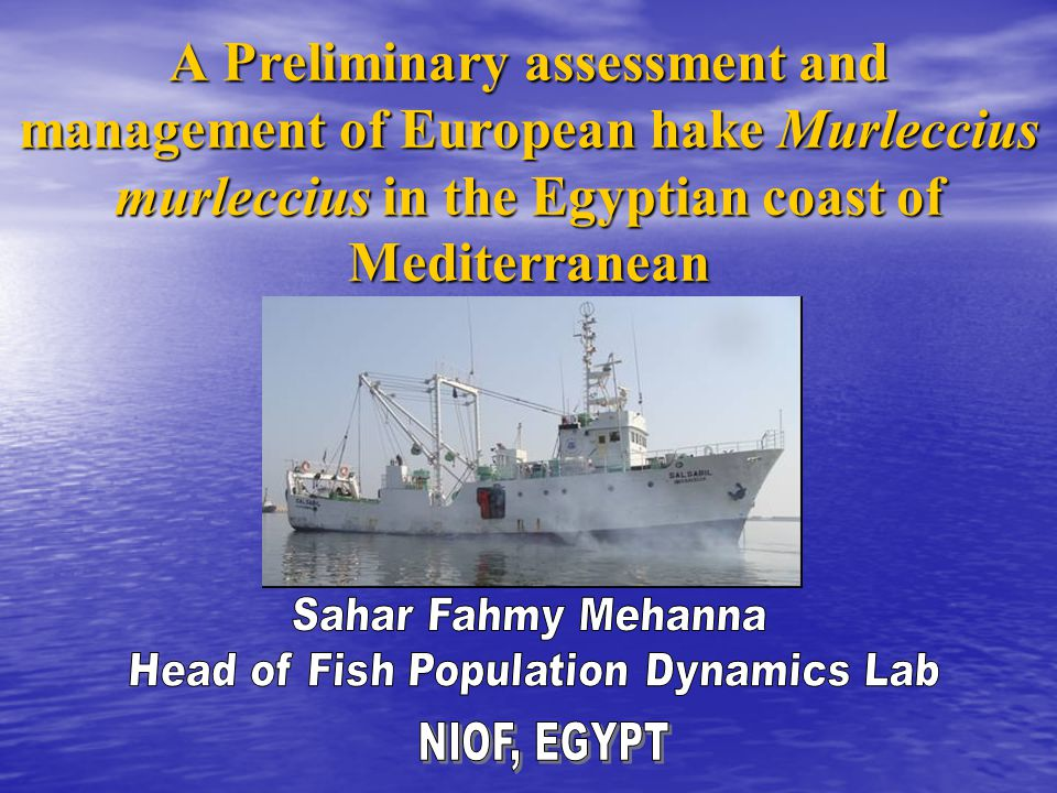 A Preliminary assessment and management of European hake Murleccius murleccius in the Egyptian coast of Mediterranean