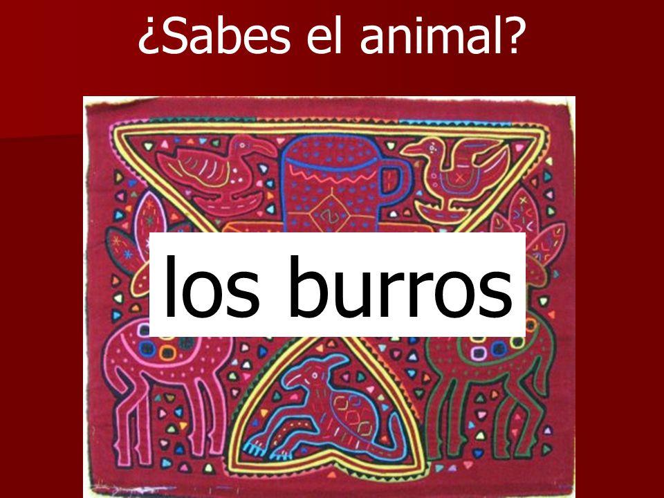 ¿Sabes el animal? los burros