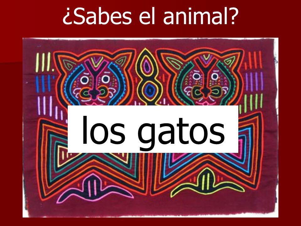 ¿Sabes el animal? los gatos