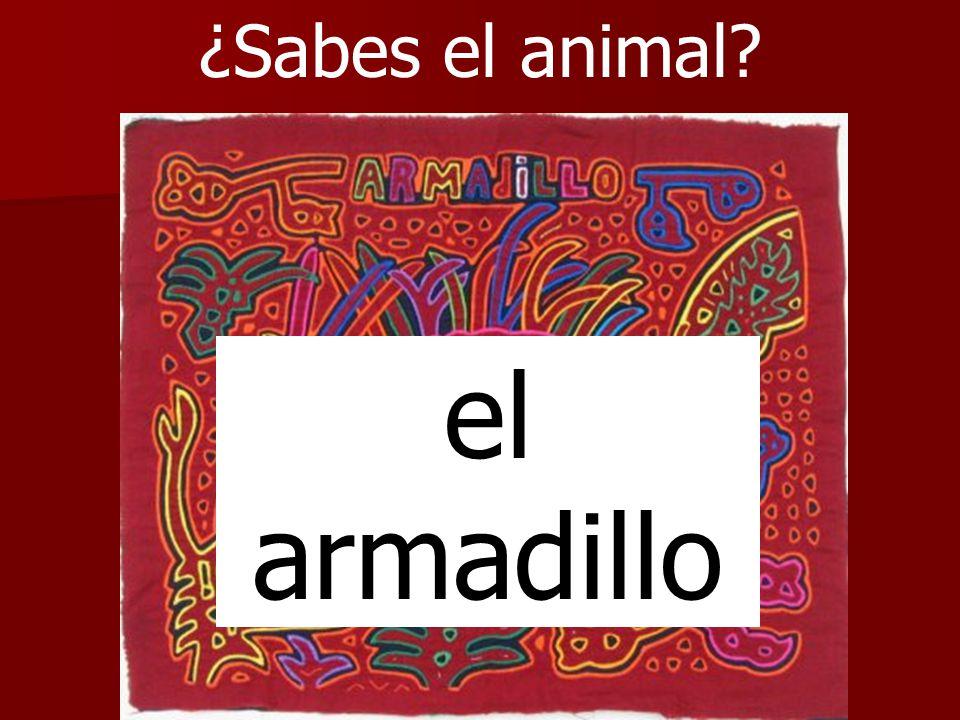 ¿Sabes el animal? el armadillo