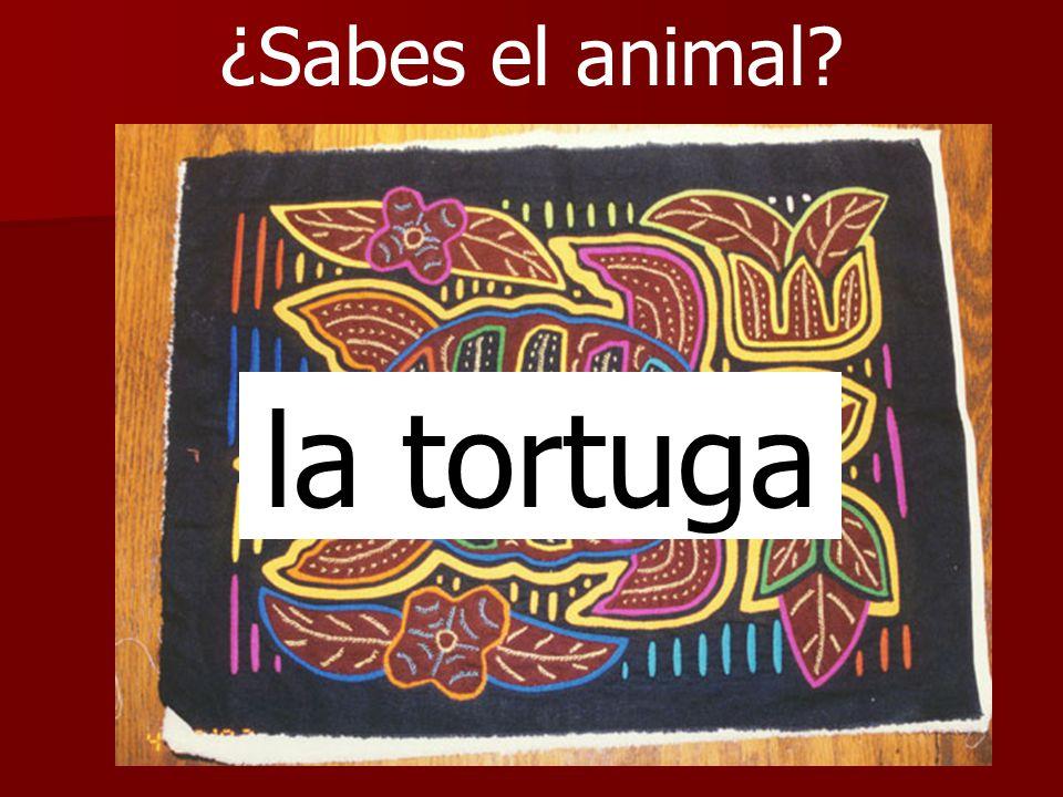 ¿Sabes el animal? la tortuga