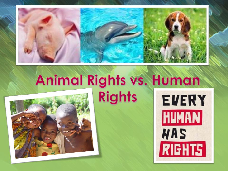What are rights? Human life versus animal life.