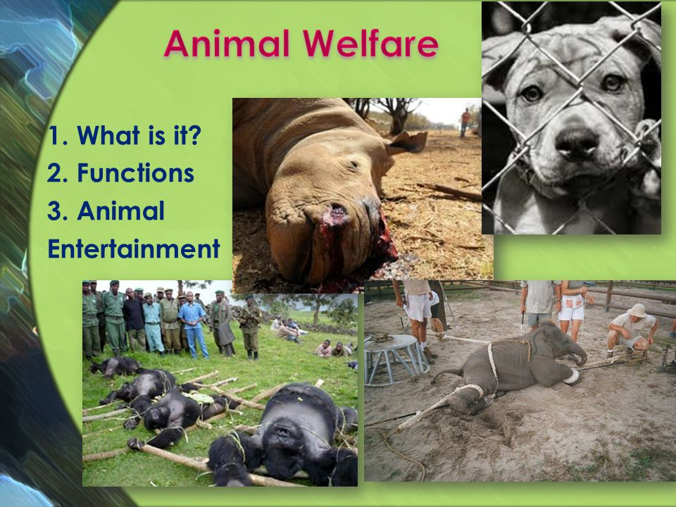 1. What is it? 2. Functions 3. Animal Entertainment