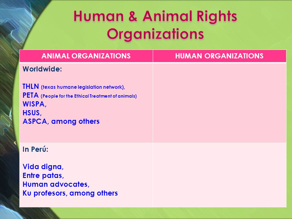 Not only humans have rights, animals have rights too.