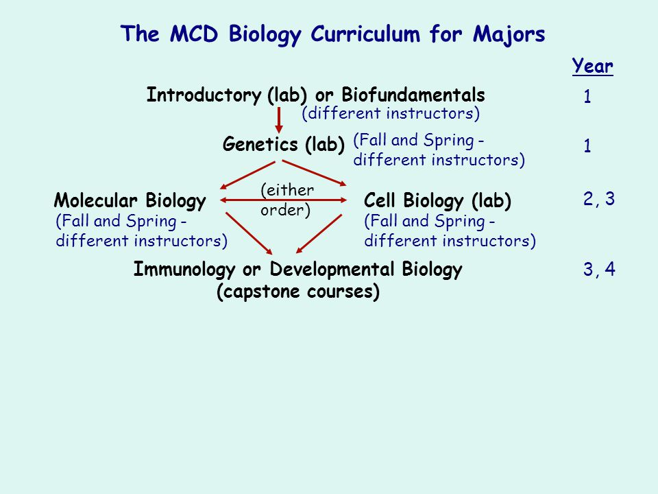 Introductory (lab) or Biofundamentals Genetics (lab) Immunology or Developmental Biology (capstone courses) (either order) The MCD Biology Curriculum