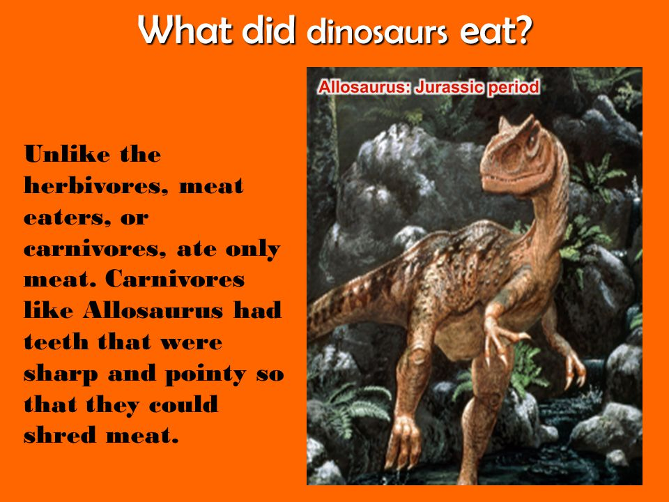 What did dinosaurs eat? Unlike the herbivores, meat eaters, or carnivores, ate only meat. Carnivores like Allosaurus had teeth that were sharp and poi