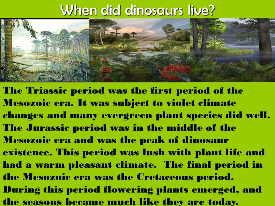 When did dinosaurs live? The Triassic period was the first period of the Mesozoic era. It was subject to violet climate changes and many evergreen pla